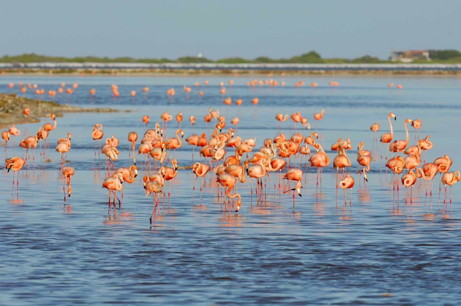 Национальный мангровый парк: фото