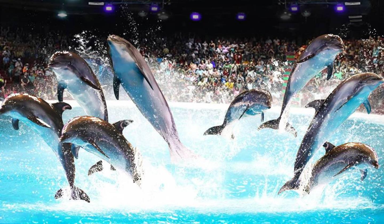 Фото дельфинариума