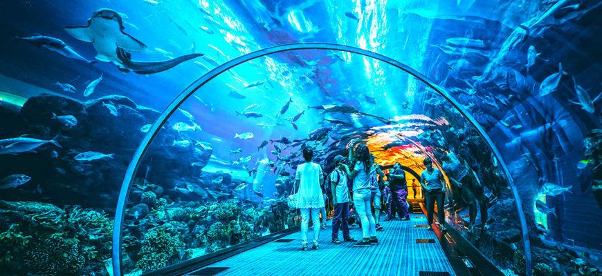 Почему стоит посетить аквариум в Дубай Молле