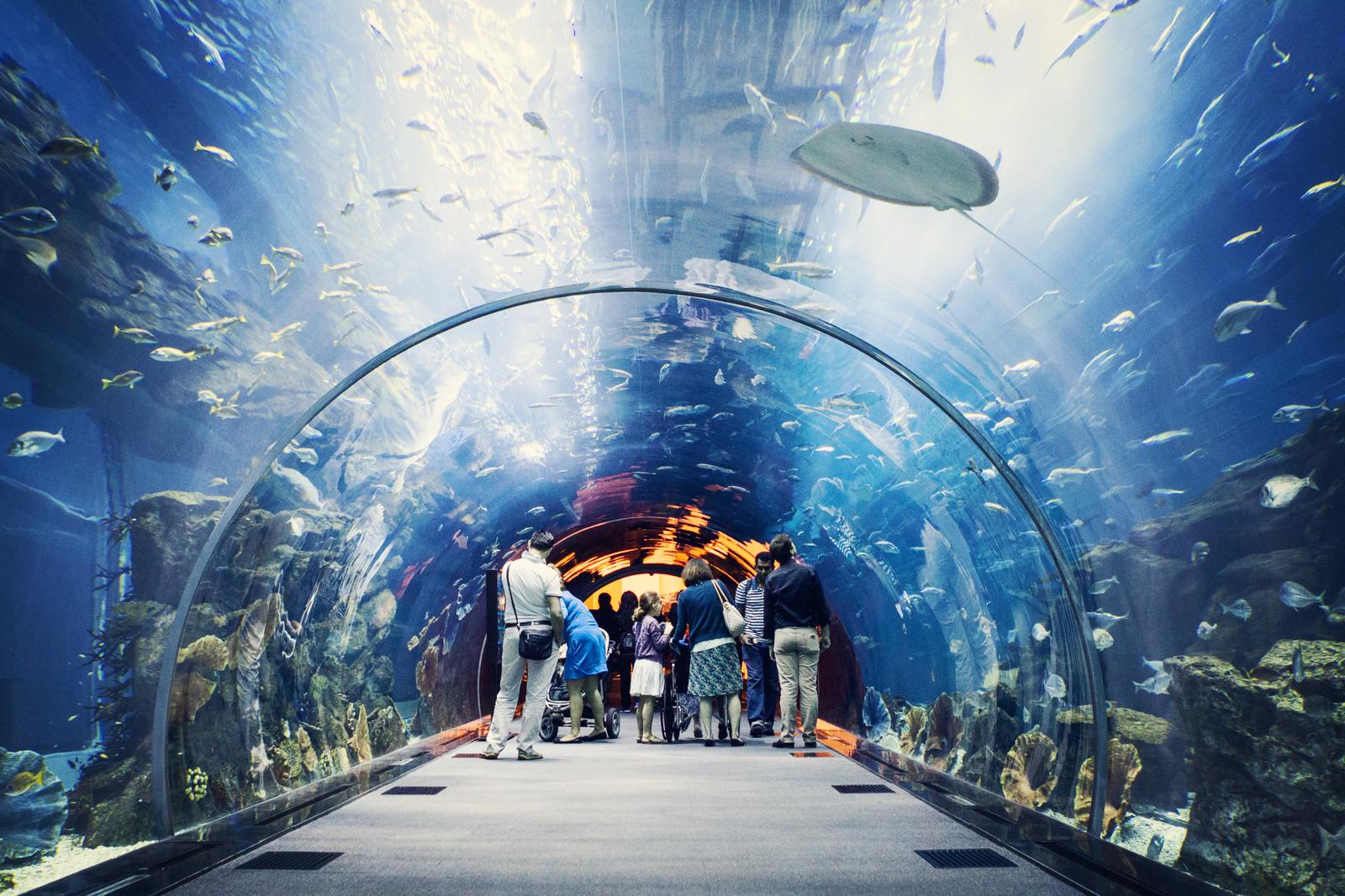 Сколько стоит океанариум в дубай молле квартиры Fujairah Аль-Фака