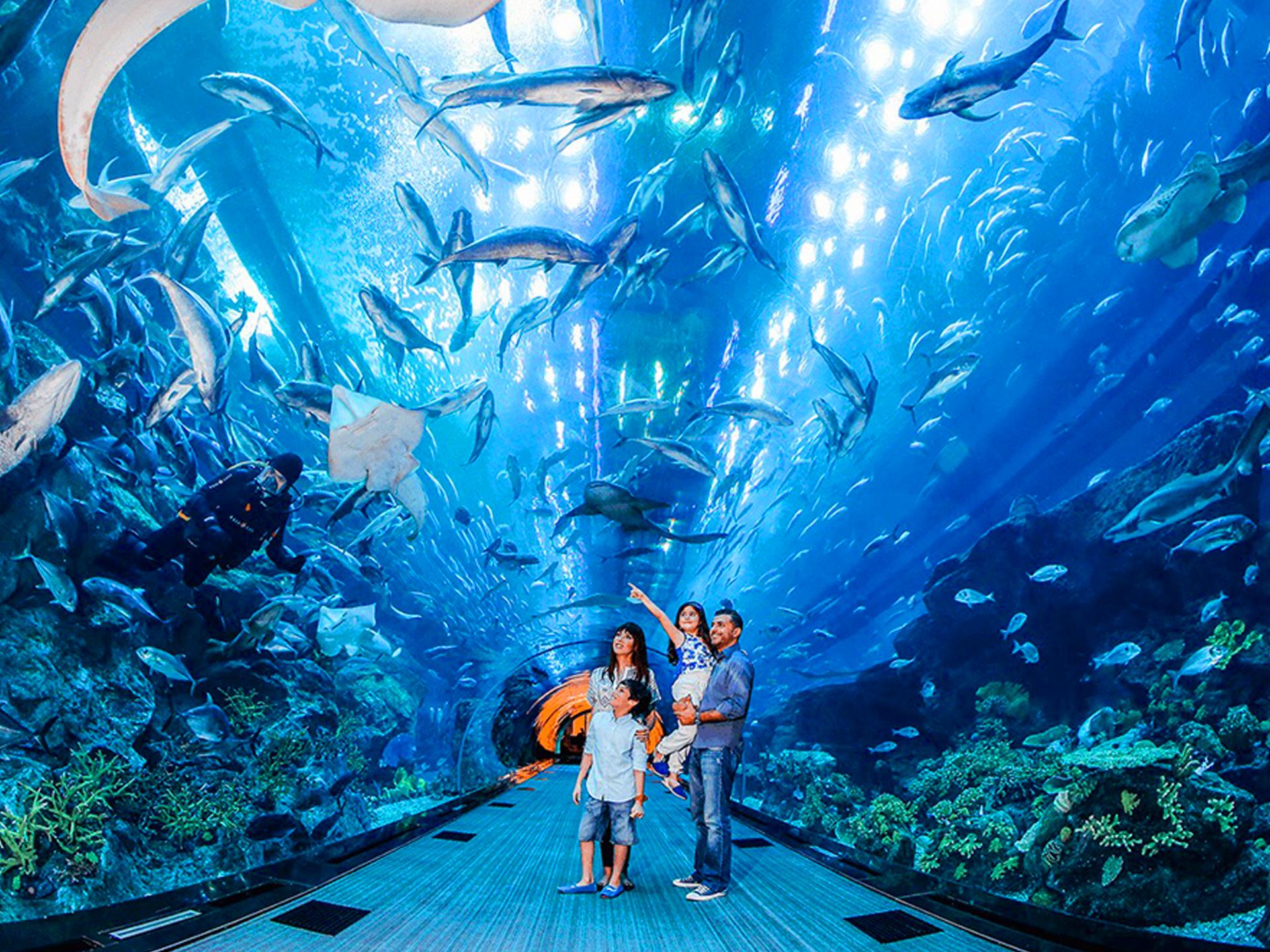Чем интересен аквариум в Дубай Молле