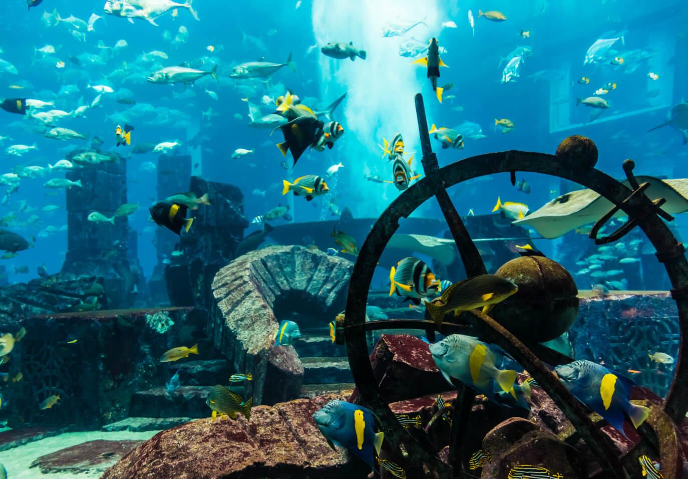 Что интересного в подводном зоопарке в Дубай Молле