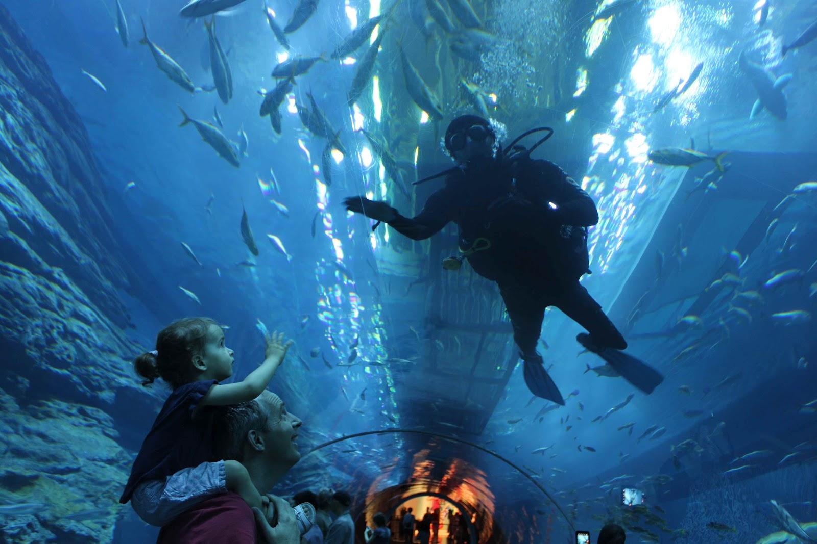Обзор услуги «Юный аквариумист»